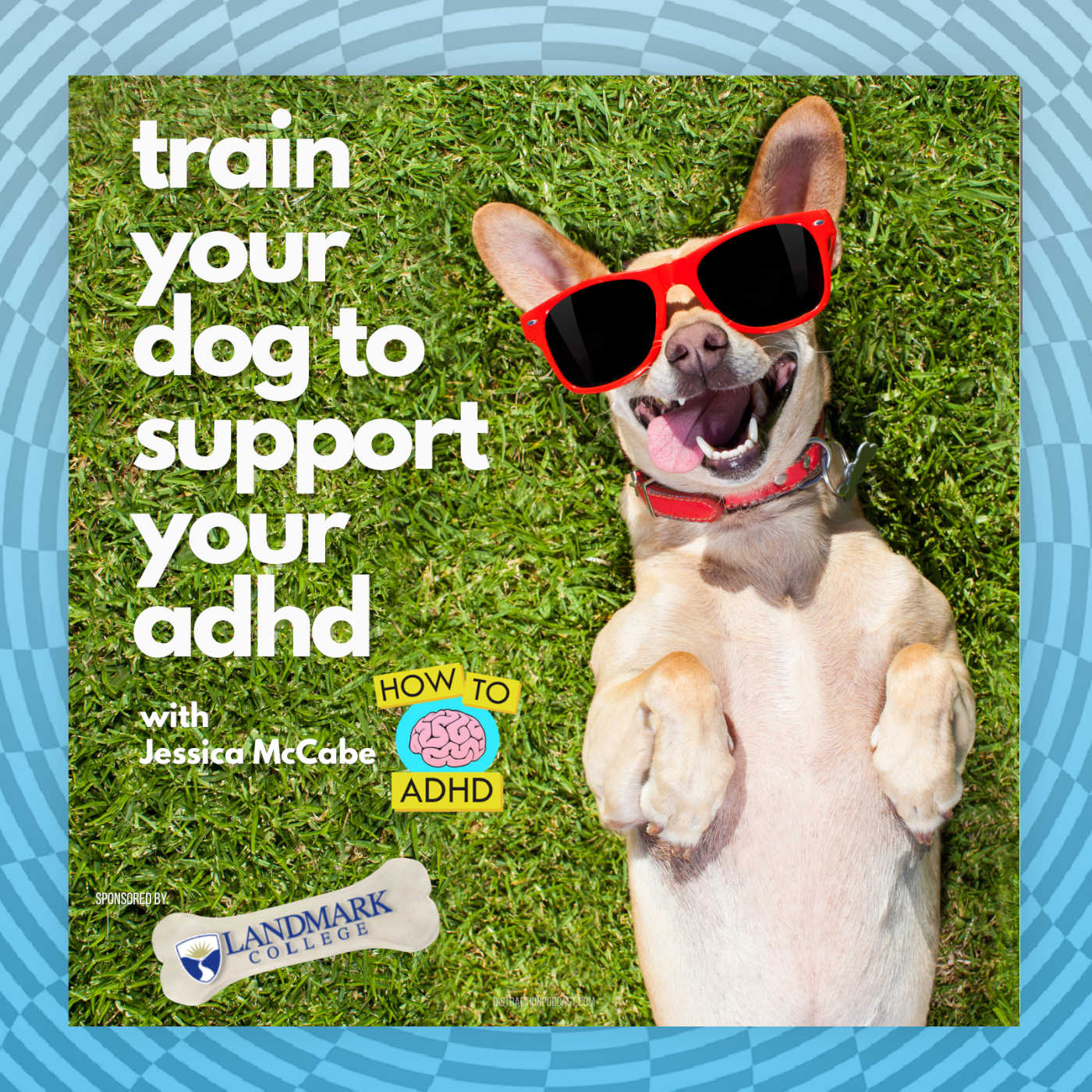 Train Your Dog to Support Your ADHD with Jessica McCabe and Landmark College
